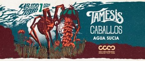 TAMESIS & CABALLOS Inv. especial Dapper Dan
